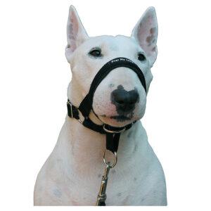 Rọ mõm cho chó Dogs My Love Halter Head
