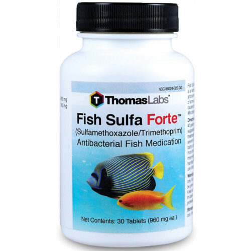 Thuốc kháng sinh cho cá kháng khuẩn Thomas Labs Fish Sulfa Forte Sulfamethoxazole/Trimethoprim Antibacterial Thuoc-khang-sinh-cho-ca-khang-khuan-thomas-labs-fish-sulfa-forte-sulfamethoxazole-trimethoprim-antibacterial-500x500